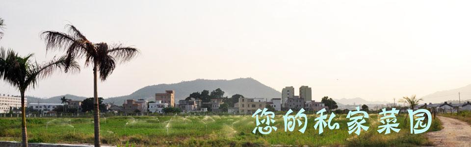 深圳人的自家菜园